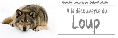 bandeau-aldd-loup