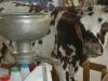 Une ecrémeuse à lait