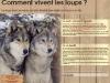 panneau loup
