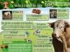 Panneau vache